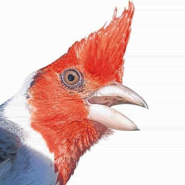 Un estudio platense revela los secretos del cardenal