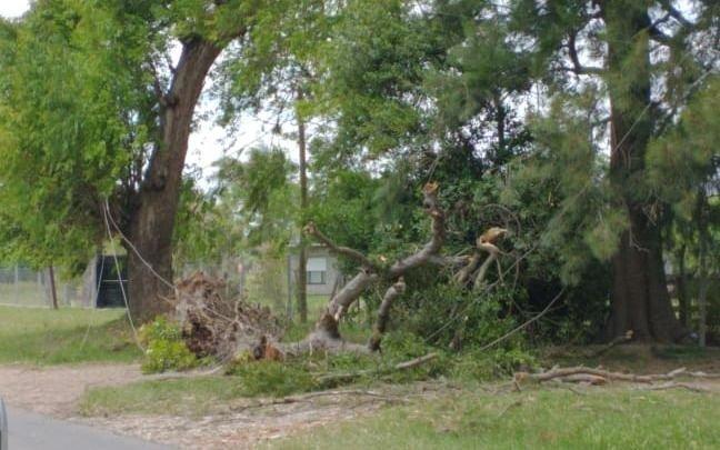 La caída de un árbol provocó un gran corte en Villa Garibaldi