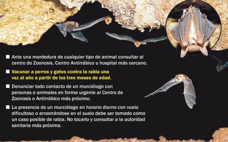 Alerta en Buenos Aires por invasión de murciélagos con rabia