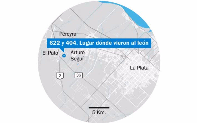 Vecinos buscan a león suelto en Berazategui — Insólito