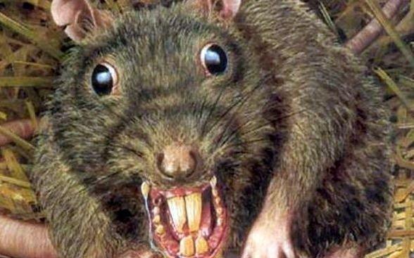 """Tras las """"ratas verdes"""", profundizan controles a las drogas secuestradas"""