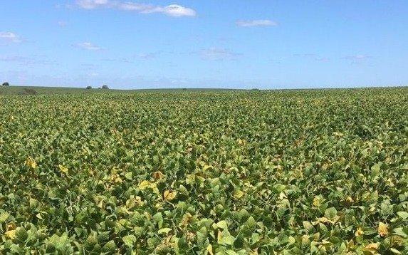 El precio de la soja cayó a nivel mundial por un aumento de la producción en EE UU