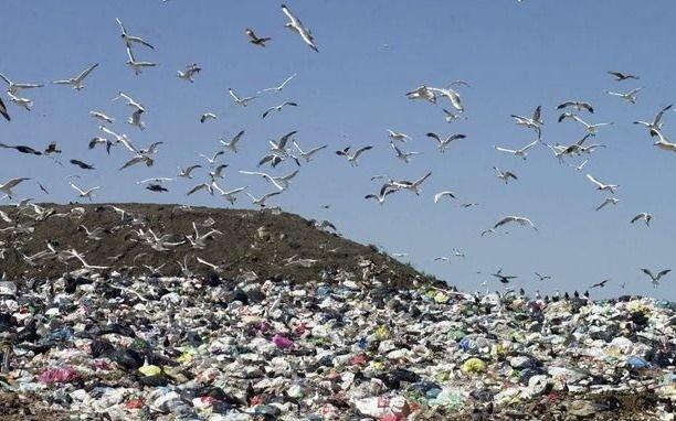 Un insoportable olor a basura invade Punta Lara y vecinos apuntan a la Ceamse