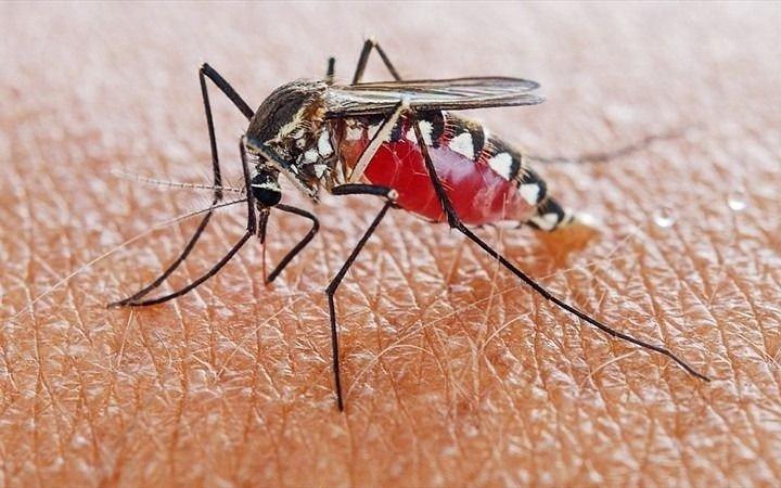 Los mosquitos tampoco aflojan y en Abasto exigen fumigaciones