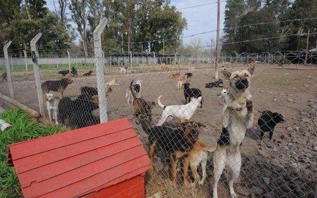 Titucha, el hogar para 600 perros, pide ayuda