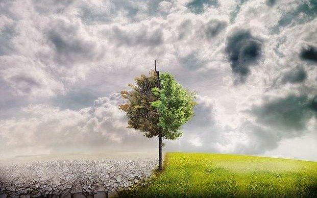 Ambientalistas platenses en una jornada de plantación másiva de árboles