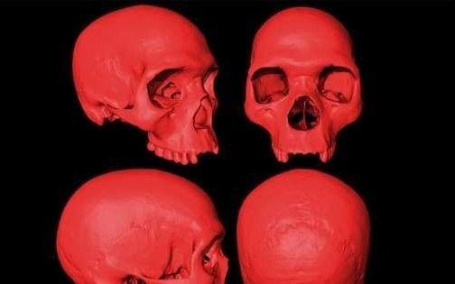 Reconstruyen en 3D el cráneo del ancestro del Homo Sapiens
