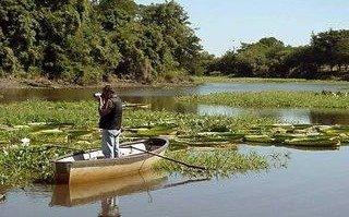 Identifican tres especies de anguilas eléctricas en los ríos de Sudamérica