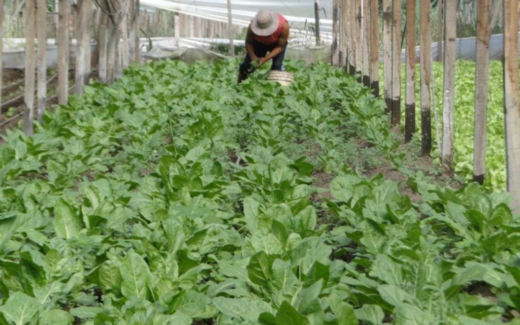 Nuevo reclamo por la inseguridad en la zona frutihortícola