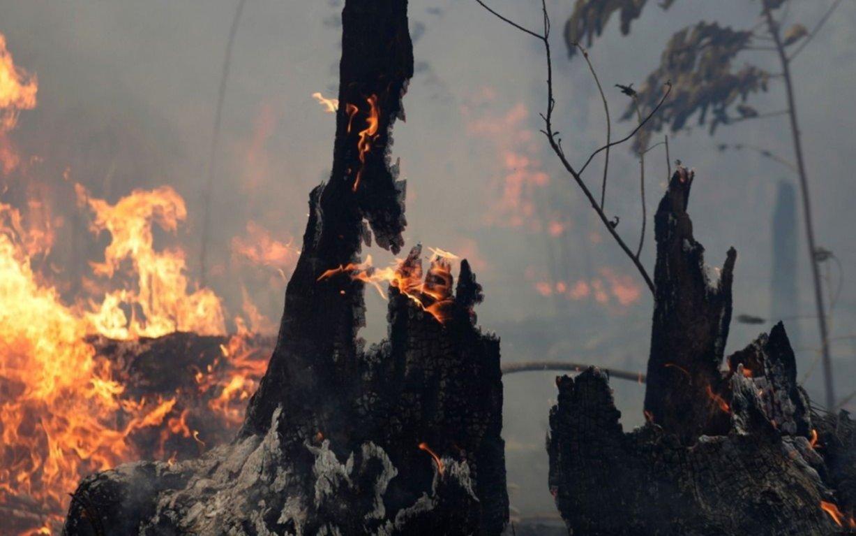 Alerta roja por incendios forestales en Chile: más de 500 hectáreas afectadas