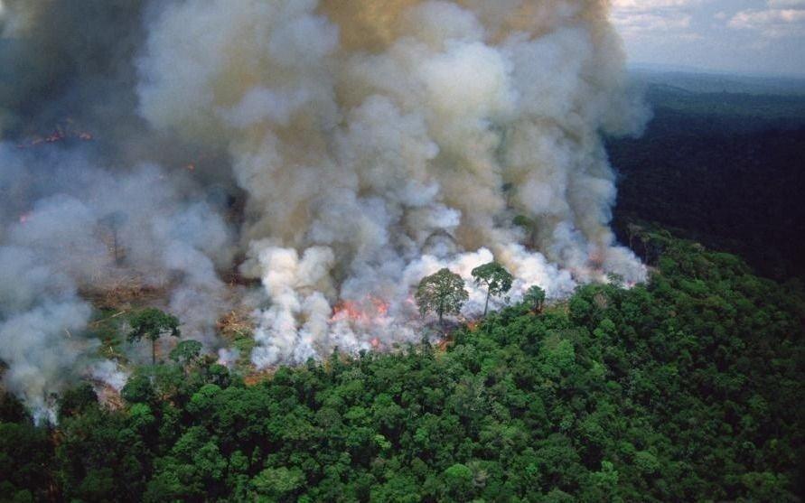 La deforestación en la Amazonia brasileña es la más alta en una década