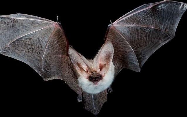 Murciélagos y cucarachas, las plagas con más demanda de fumigación en la Ciudad