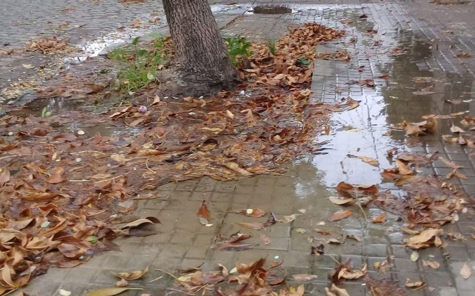 """En Barrio Hipódromo """"brota un torrente en la vereda"""" y no se puede transitar"""