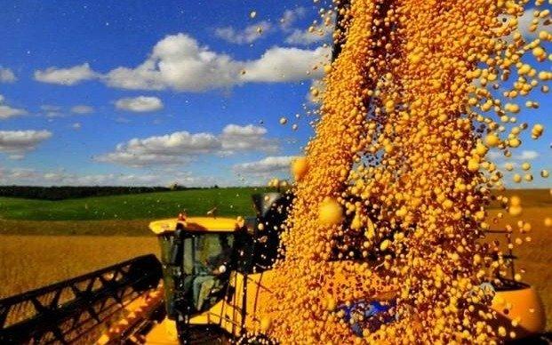 La soja se encaminan a los US$ 500 la tonelada