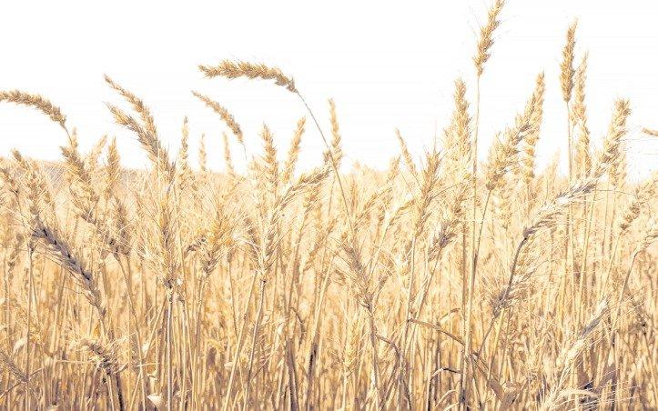 """Por qué el maíz que se exporta no va en contra de """"la mesa de los argentinos"""""""