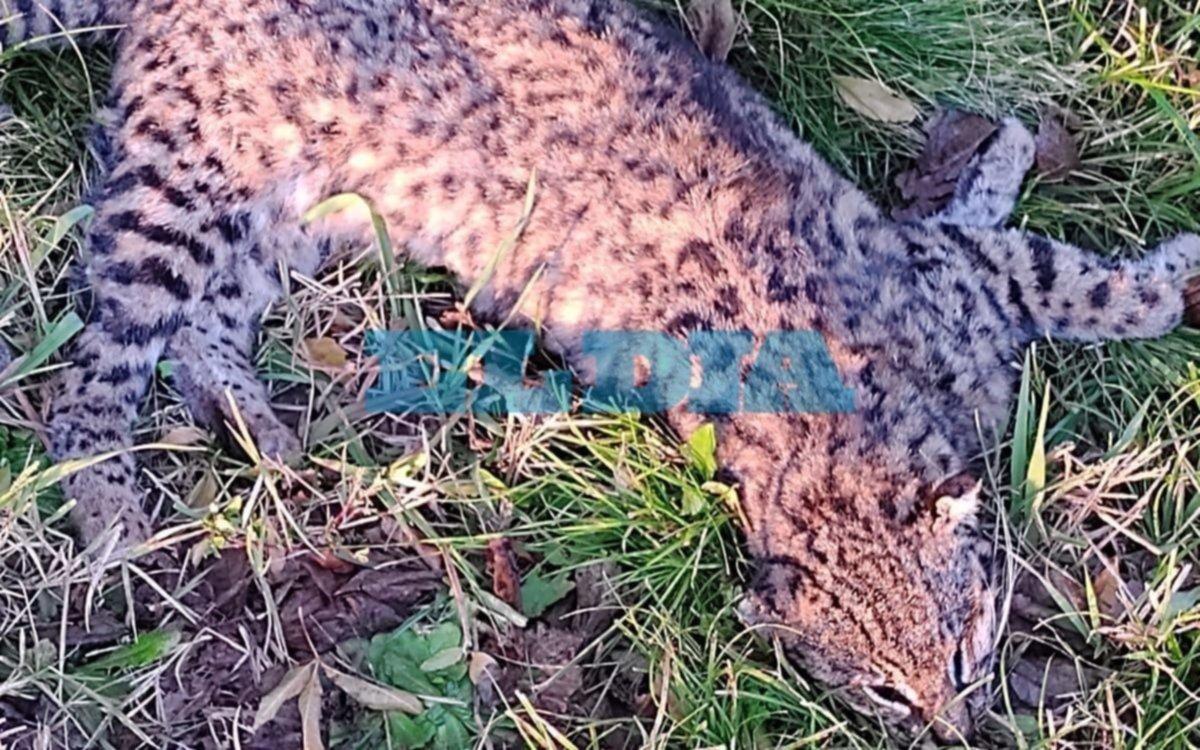 Alerta vecinal por animales muertos cerca del ECAS